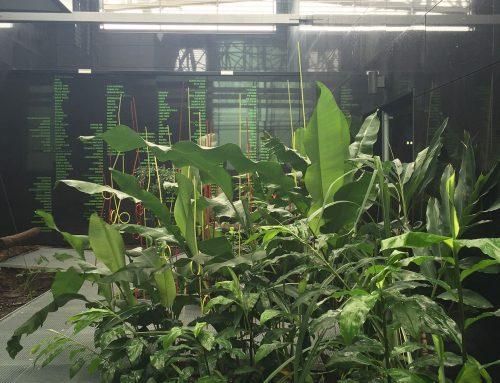 Jardin créole du MACTe